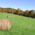Bennington, VT Farm