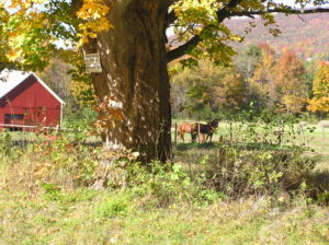 Vermont Farm in the Fall